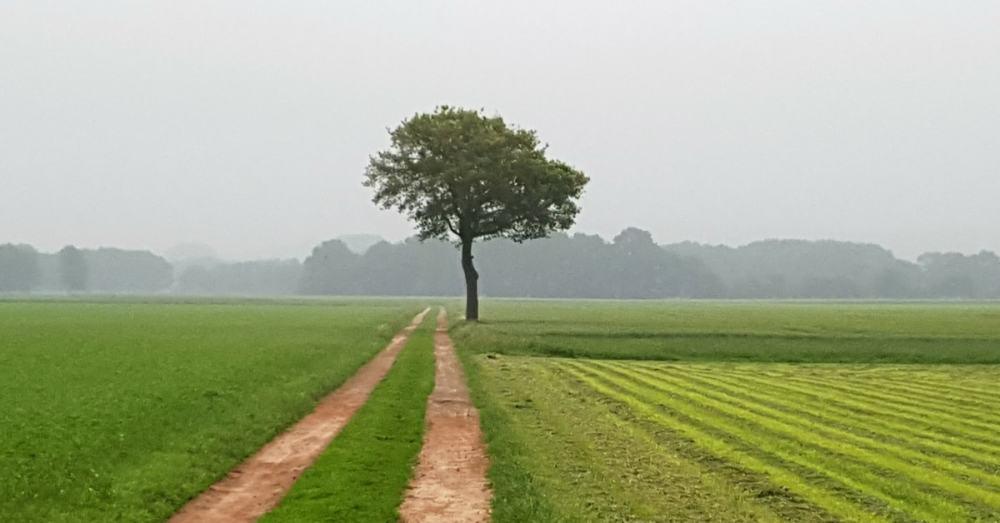 1200x628-Walk-of-Wisdom-Groesbeek-Milsbeek-Hinde-Lodges-min