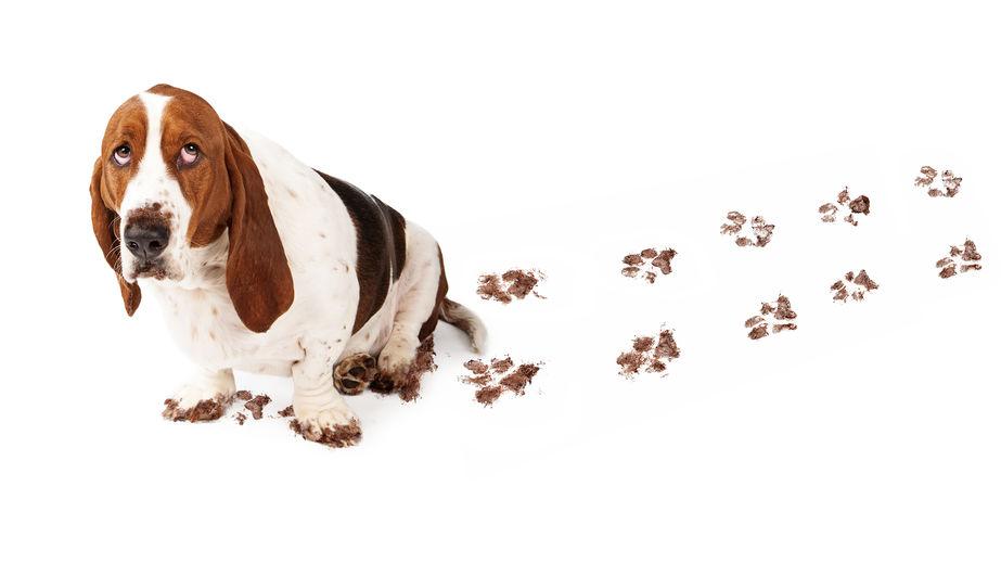 schuldgevoel-hond